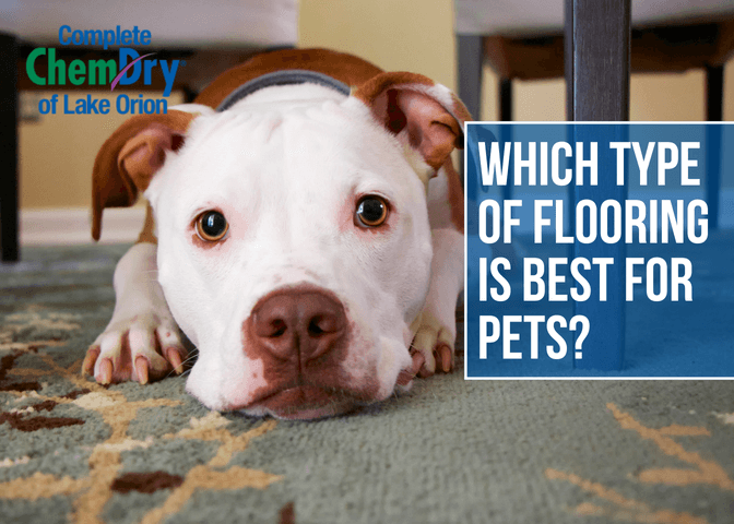 Which Type of Flooring is Best for Pets?