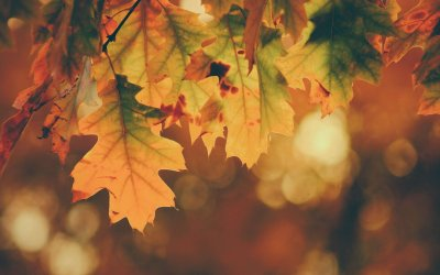Why Fall Is The Ideal Season To Have Your Carpets Cleaned